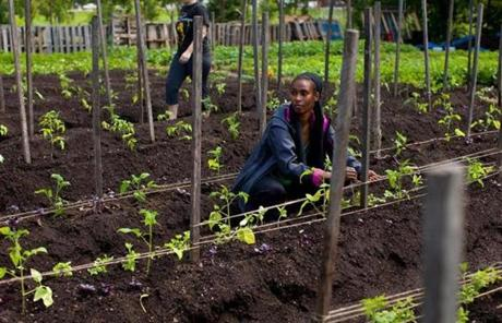 City Growers trains apprentice farmers at plots it runs in Dorchester and Roxbury.